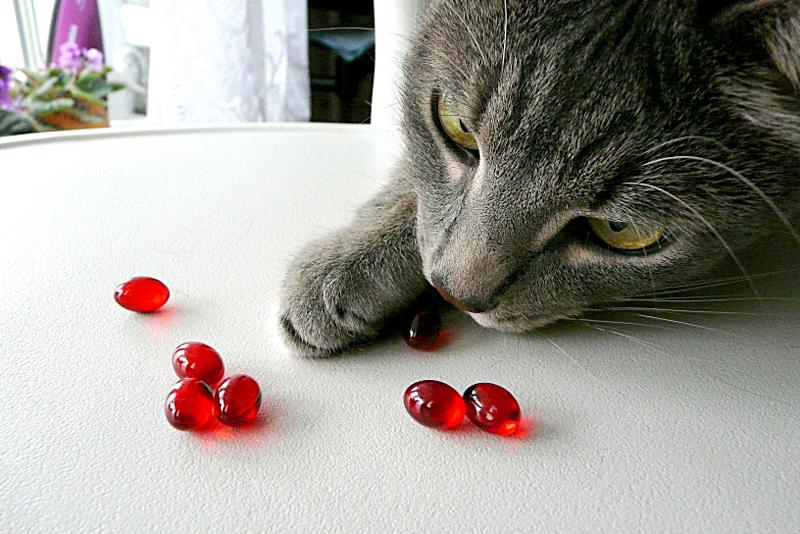как давать кошке витамины