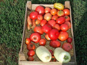 hranenie-ovoschey-v-vermiculite