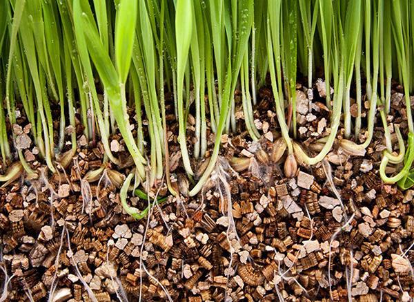 primemenie-vermiculita-v-hydroponice-aquaponice