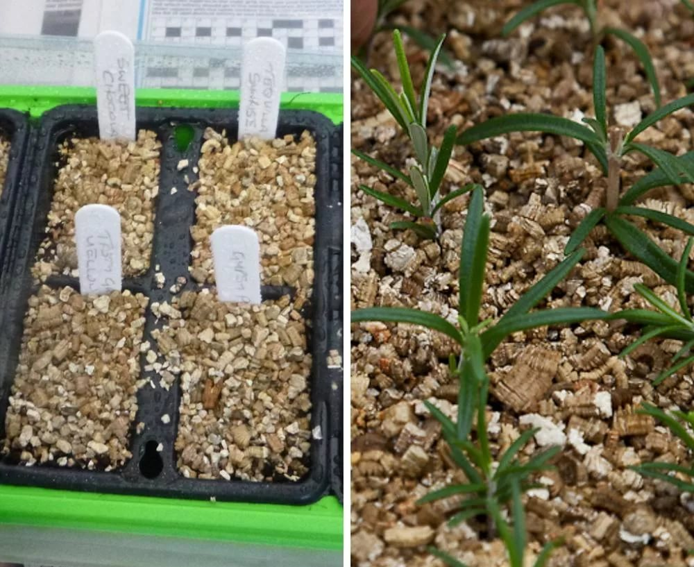 vermiculite-dlya-rasteniy