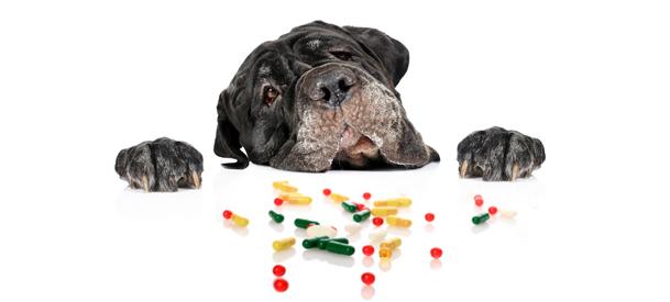 витамины и ветпрепараты