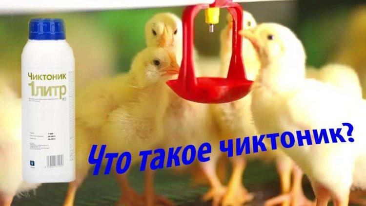 chicktonic_dlya-ciplyat