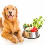 Лучшие витамины для собак, щенков и беременных собак