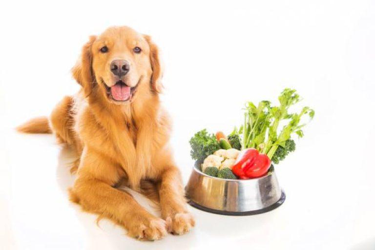 Питание собак щенков