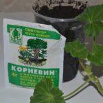 Корневин — стимулятор роста корней, инструкция по его применению