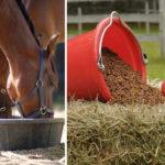 Здоровье лошади, содержание, уход, кормовая база.